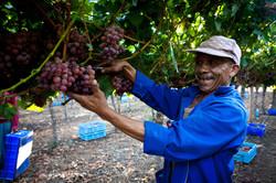 acg-fruit-exporters-positive-farmer