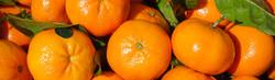ACG-fruit-exporters-oranges-citrus