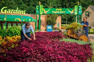 """A groundskeeper cheerfully tends to a garden of flowers at the """"World's Most Beautiful Park"""", Busch Gardens Williamsburg"""
