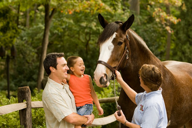 A family get an up close and personal meet and greet with a Clydesdale horse in a beautiful pasture.