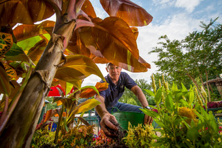 A landscaper tends to exotic plants in this worm's-eye view of groundskeeping at a theme park
