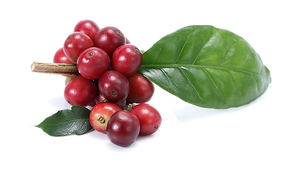 Coffeeberry.png