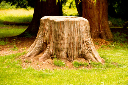 Do Not Become a Stump: A Message for Parents of Children with Special Needs