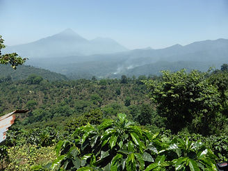 Huehuetenango-Guatemala-Coffee-Farms-e14