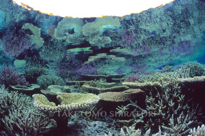 マイナス潮位とべた凪が水面に映すサンゴの楽園(宮古列島・ヤビジ)