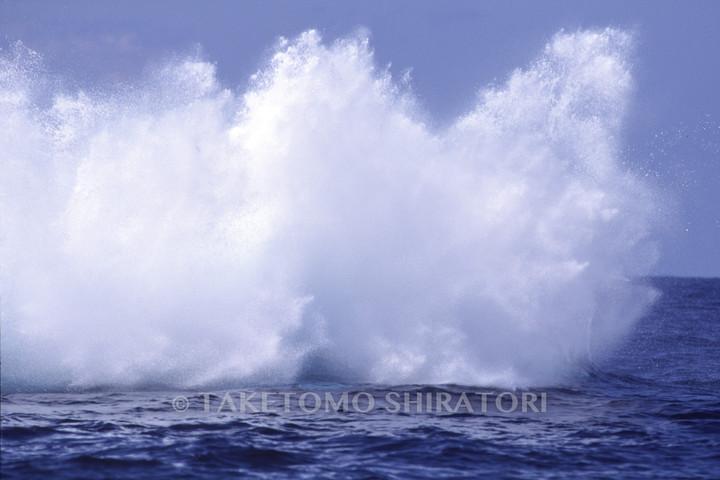 突然のブリーチング Ⅲ(慶良間諸島)