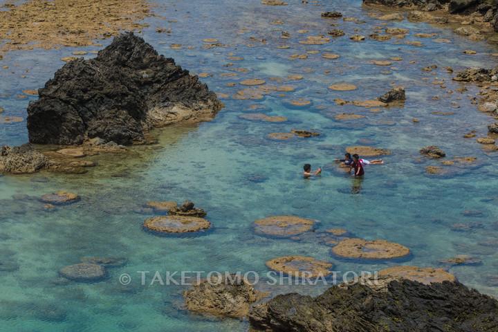 春の最干潮のイノー(沖縄本島)