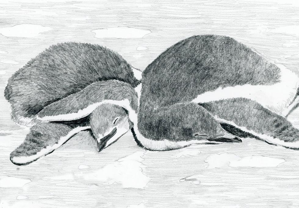 Ep309 Sam Dead Penguin Art Final Dry