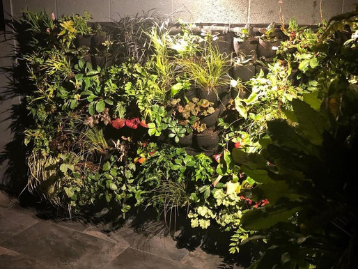 Ditch the pot plants for a living wall.