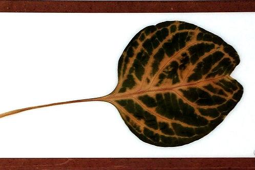 Painel Botânico Moldura Fina Floresta 1 - 330020