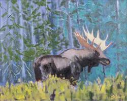 Bull #0045H