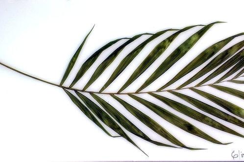 Painel Botânico Palmeira - 33004