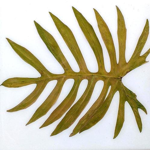 Painel Botânico Costela de Adão - 25025