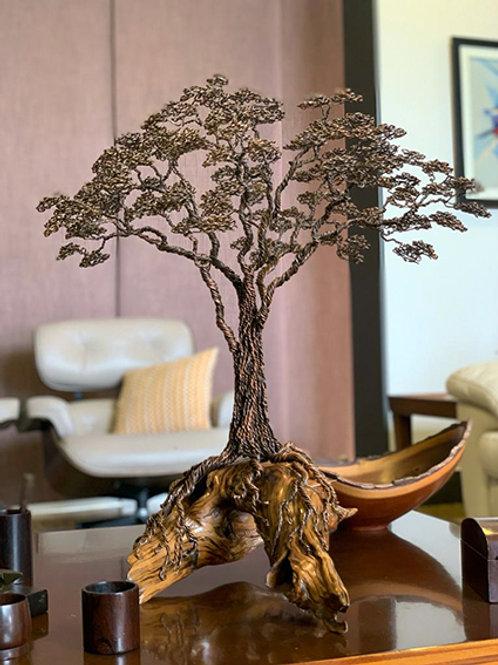 Bela Árvore