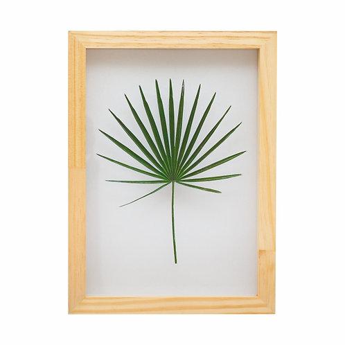 Quadro Folha de Palmeira Vidro com Moldura Pinus A4