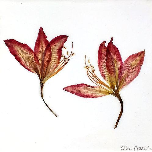 Painel Botânico Lírios - 25020
