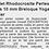 Thumbnail: Bracelet Rhodocrosite perles rondes 10 mm Breloque Yoga