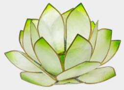 Lotus Lever du Soleil - Vert