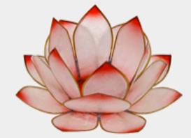 Lotus Lever du Soleil - Rosé