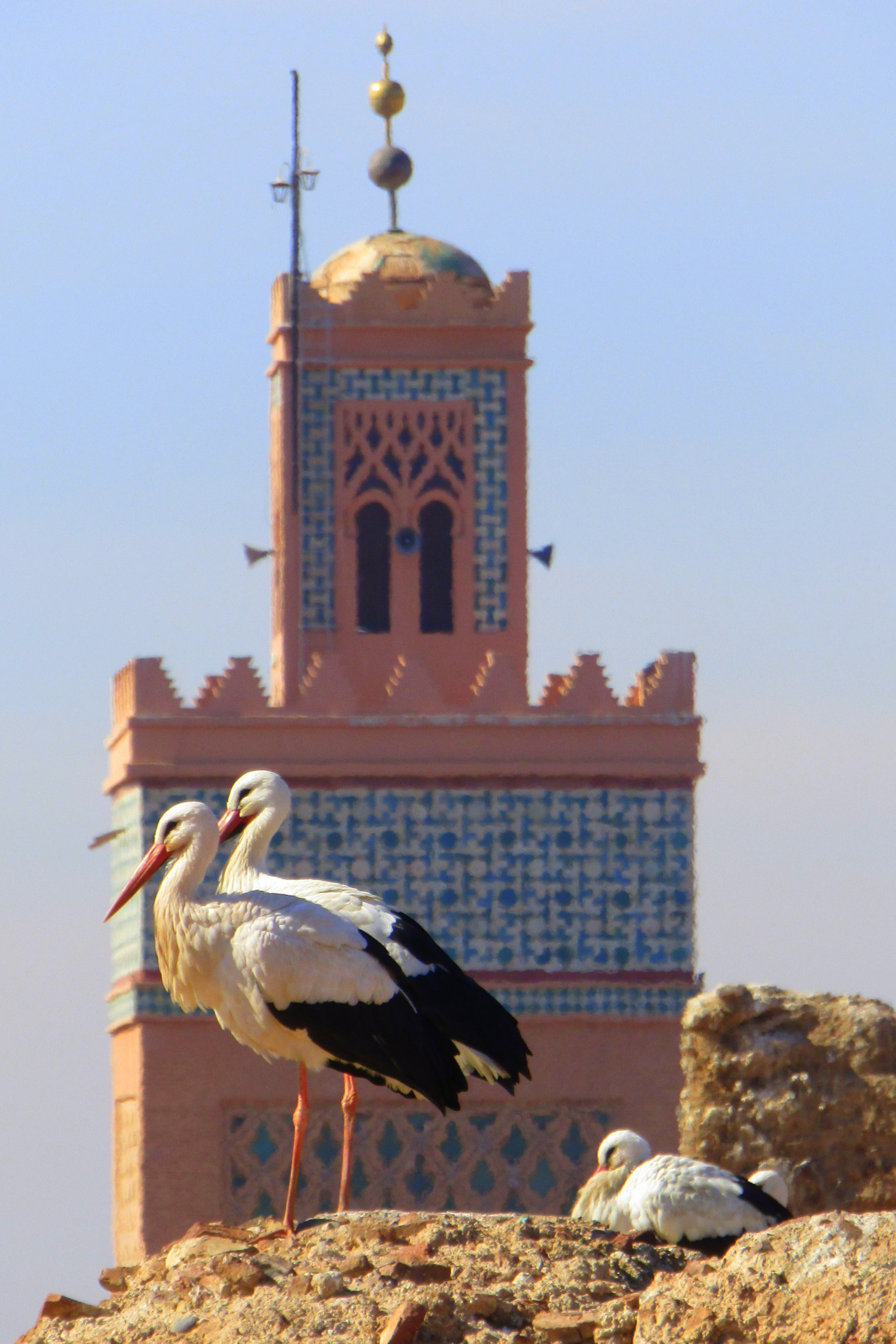 Storks nesting, Marrakech