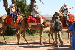 Camel Ride Marrakech (5)