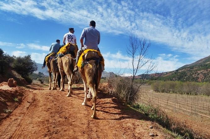 Atlas Camel Trek (8)