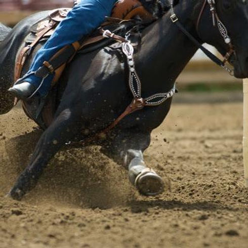 barrel-horse.jpeg