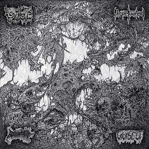 Oxalate / Perpetuated / Blood Spore / Vivisect - Perpetuated / Blood Spore... CS