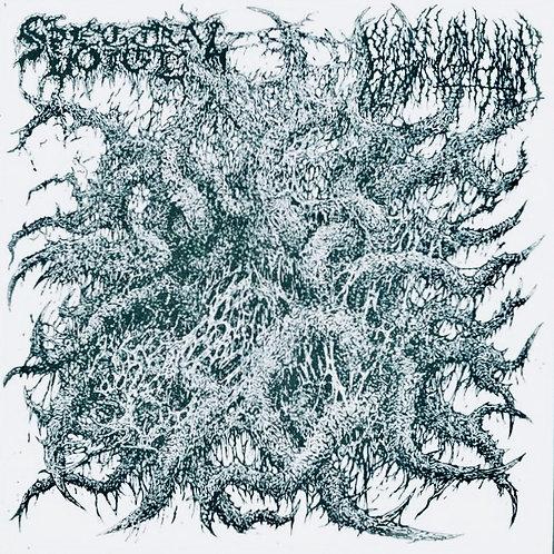"""Spectral Voice/Blood Incantation- Split 7"""""""