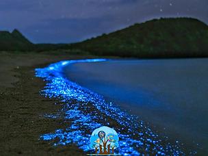 Catálogo Bioluminiscencia.PNG