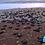 Thumbnail: Liberación de Tortugas ¡Mira la Vida!