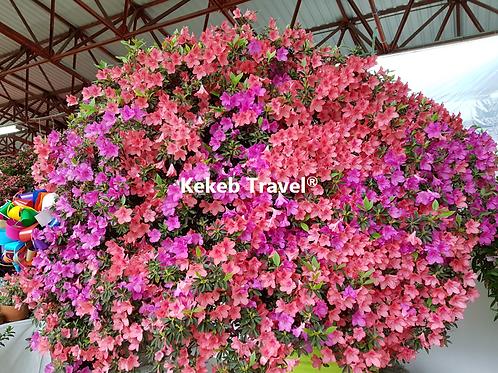 Feria de las Flores Huauchinango más Café, 1 Día, Marzo: D 22, S 28