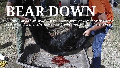 Bear Down WUFT News