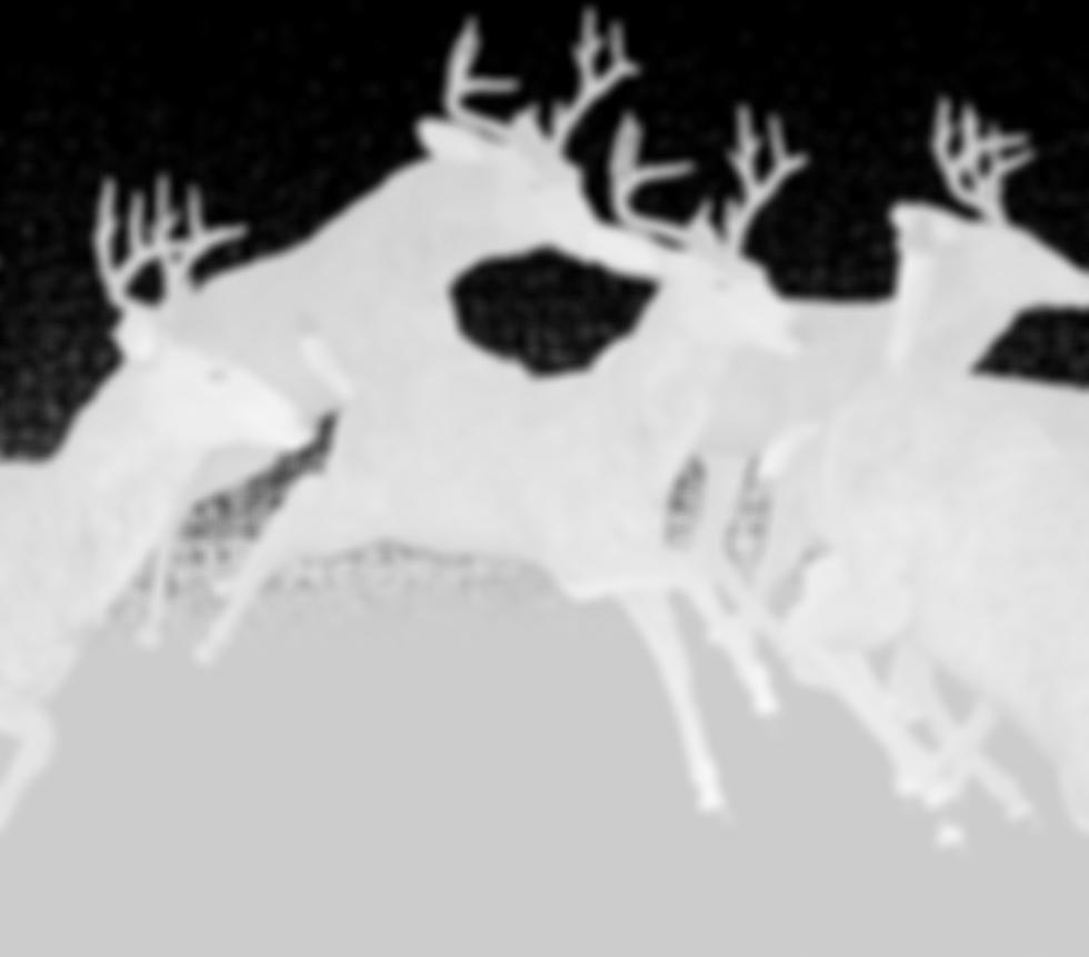 deer-1998968_1920_edited.png