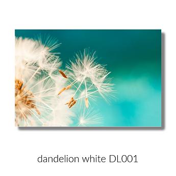 dandelion DL001 webiste.png