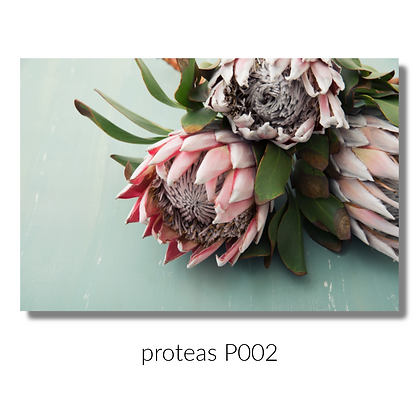 protea 002 - website.png