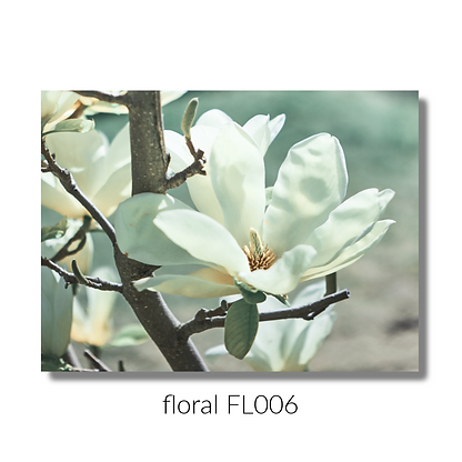 floral 006 website.png