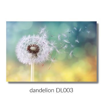 dandelion 003 website.png