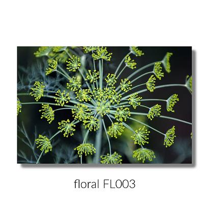 floral 003 website.png