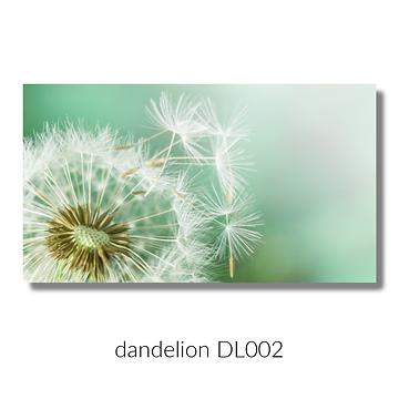 dandelion 002 website.png