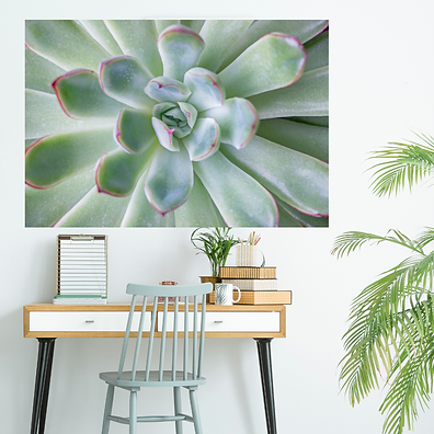 succulent2 collage.png