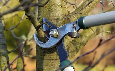 sb_us_pruning_4413.jpg