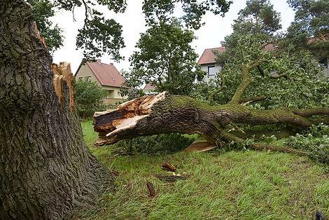 branch-broken-off-tree_GettyImages-1200x