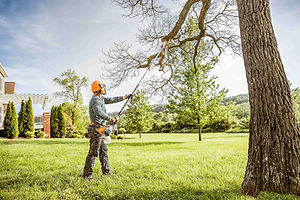Tree & Plant Pruning