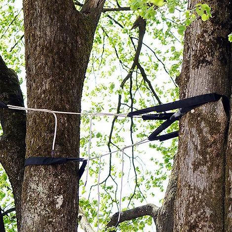 professional-tree-cabling-bracing.jpg