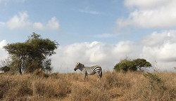 🌾Upendo wa kweli 🌾 #Nairobi #Kenya #tb