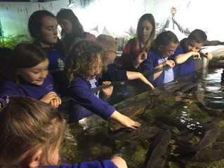 Room 1 and Room 2 School Tour to Galway Aquarium