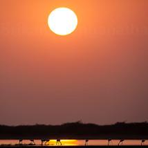 Flamingoes enjoying in sun-kissed water