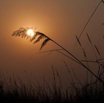 Beholding the Sun