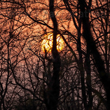 Sun and the network of branches